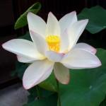 meditationaa